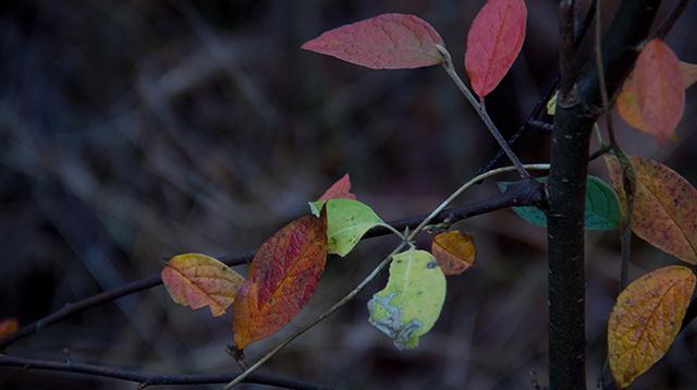 Macro Image of Leaves